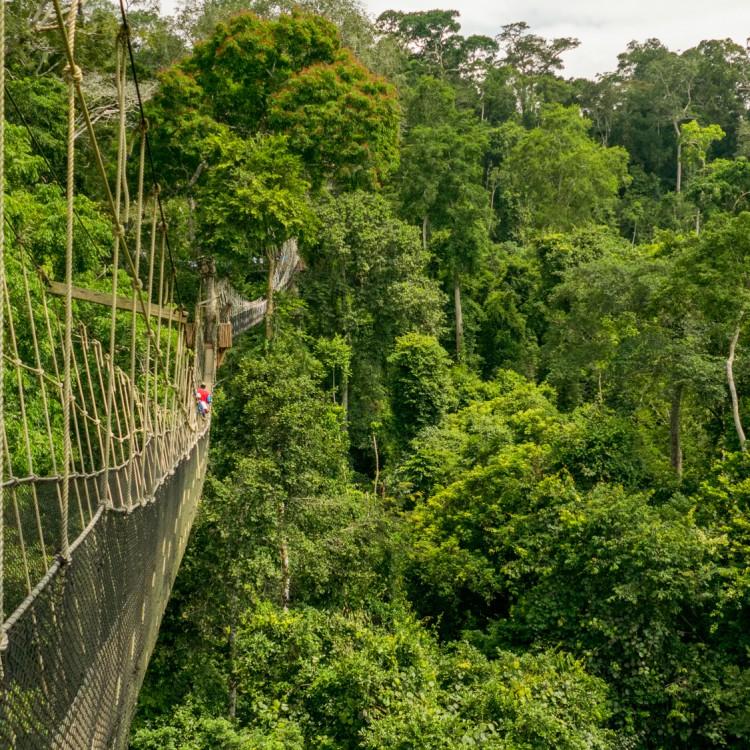 Day 3 KAKUM CANOPY & Birding paradise - Ghana Safari Tours