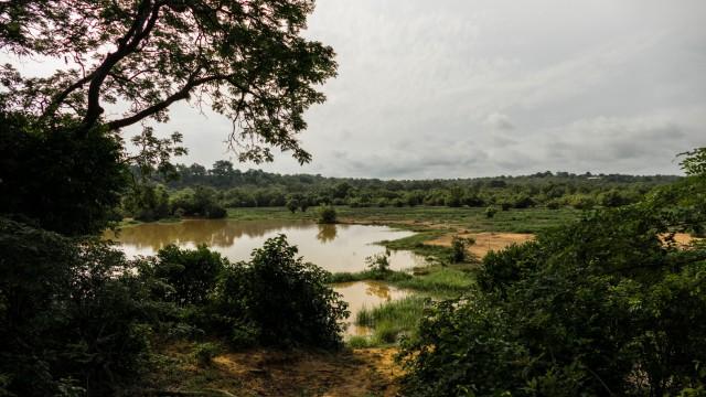 Waterhole on savanna